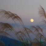 月見を秋にする由来とは?十五夜の月の高さが関係してる?