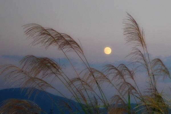 お月見とススキ