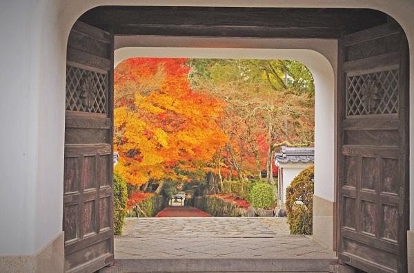 興聖寺の紅葉トンネル