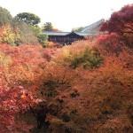 京都の紅葉2016!見頃の時期はいつがベストタイミング?