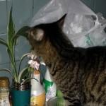 猫が吐く原因とは?対処しても繰り返す嘔吐は意外な理由?