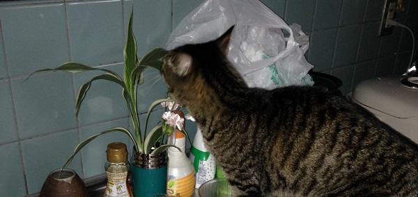 猫が吐く原因の植物