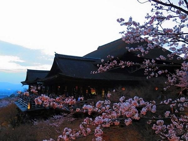 清水寺の夕桜の写真2